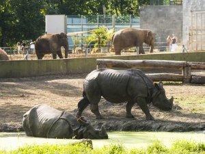 Nyíregyháza Állatpark 16