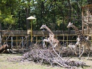 Nyíregyháza Állatpark 19