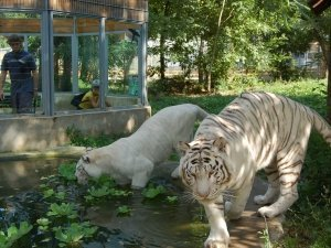 Nyíregyháza Állatpark 20
