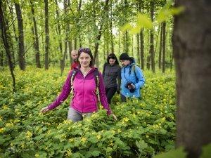 Nyíregyháza Sóstói-erdő 06